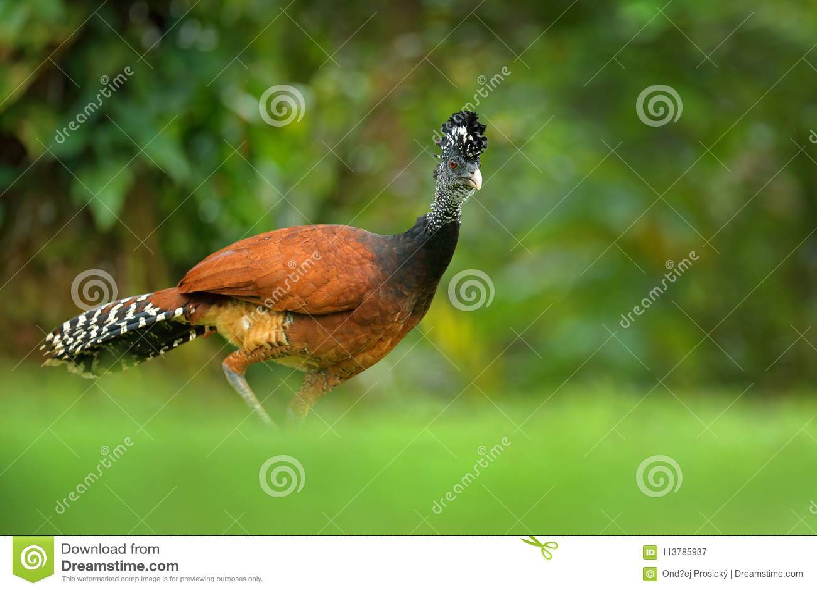 Www. μεγάλο μαύρο πουλί