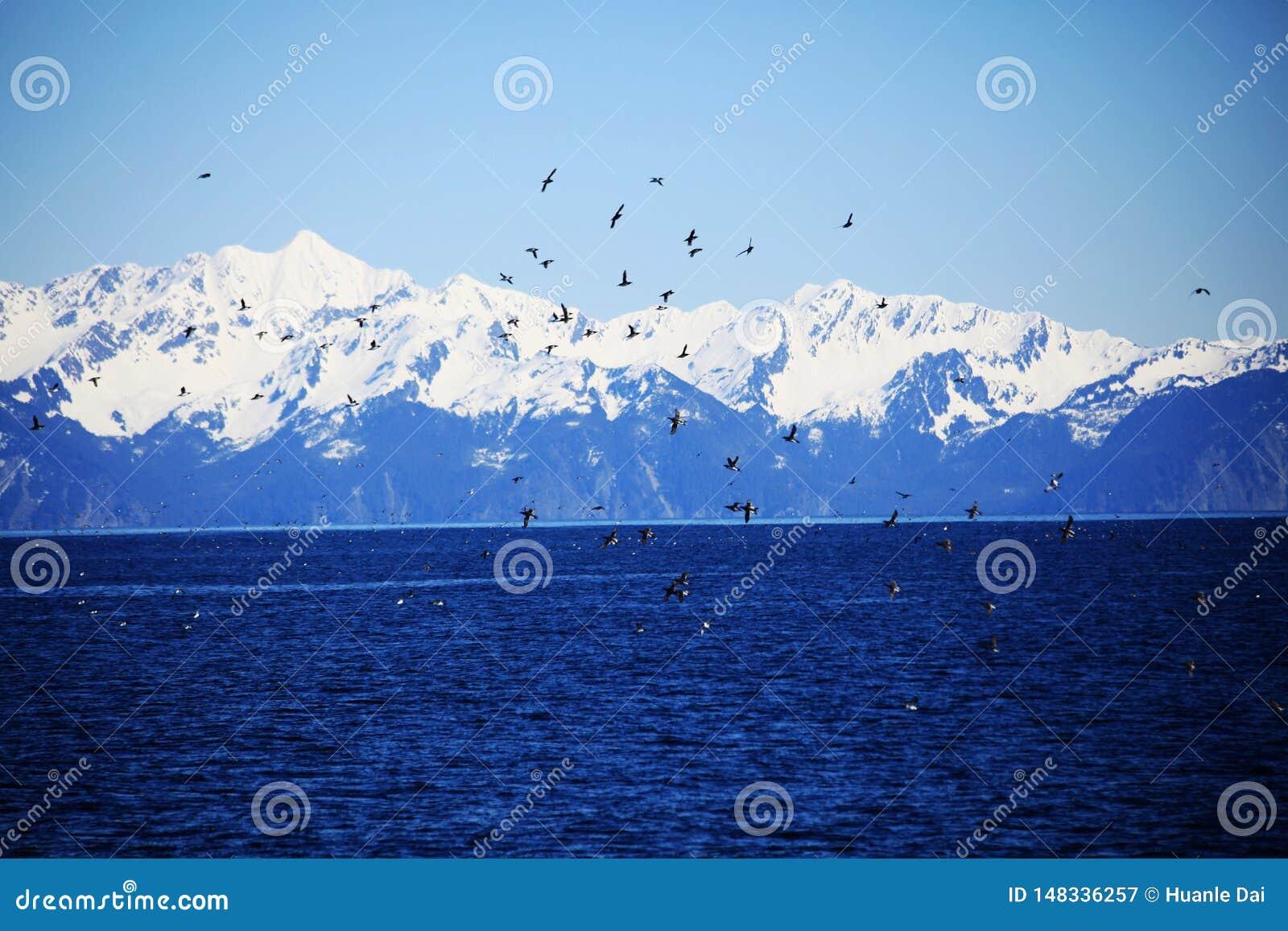 Πουλί, μπλε ουρανός, βουνό, λίμνη