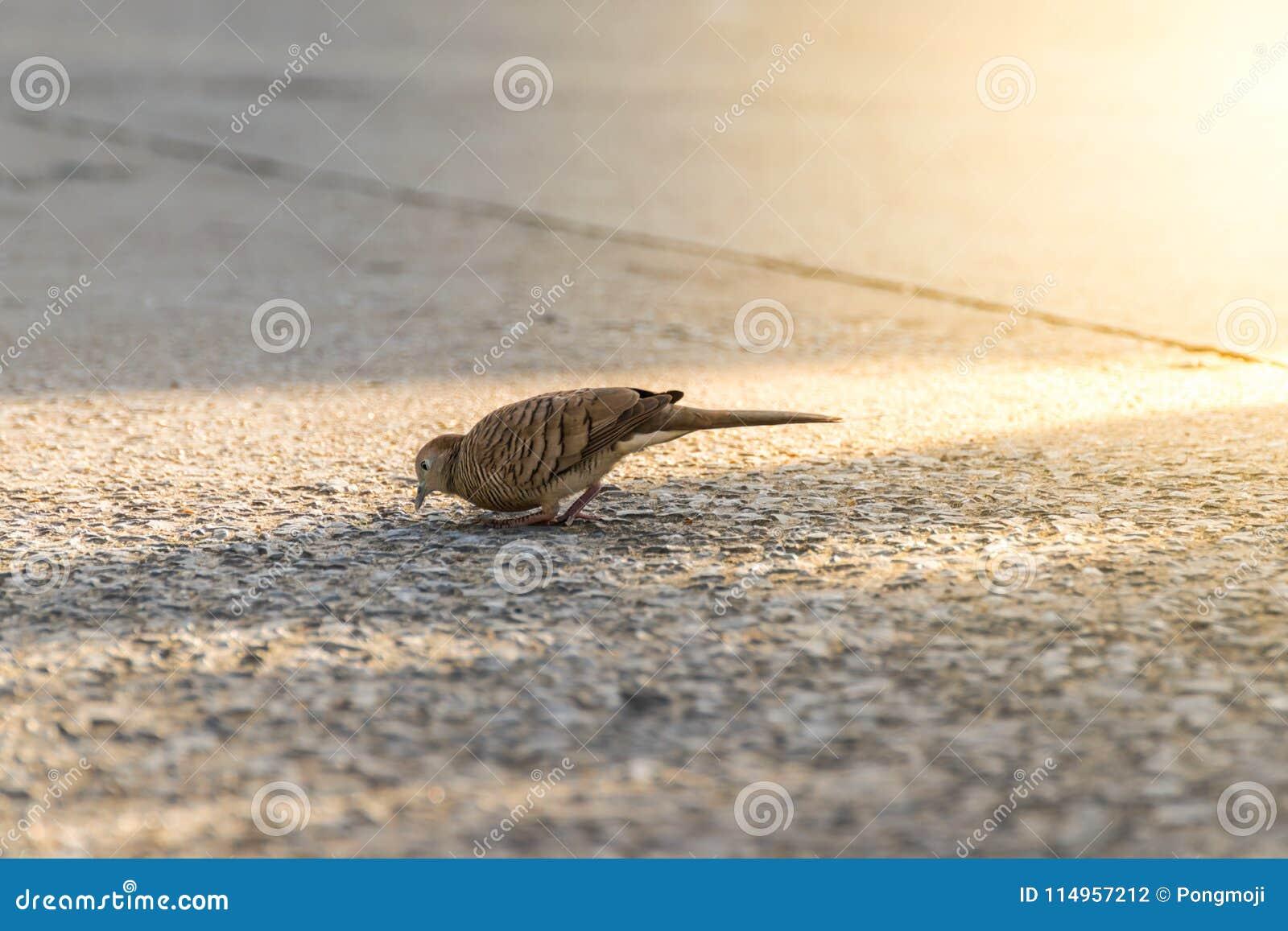 Πουλί (περιστέρι, περιστέρι ή αποσαφήνιση) σε μια πόλη