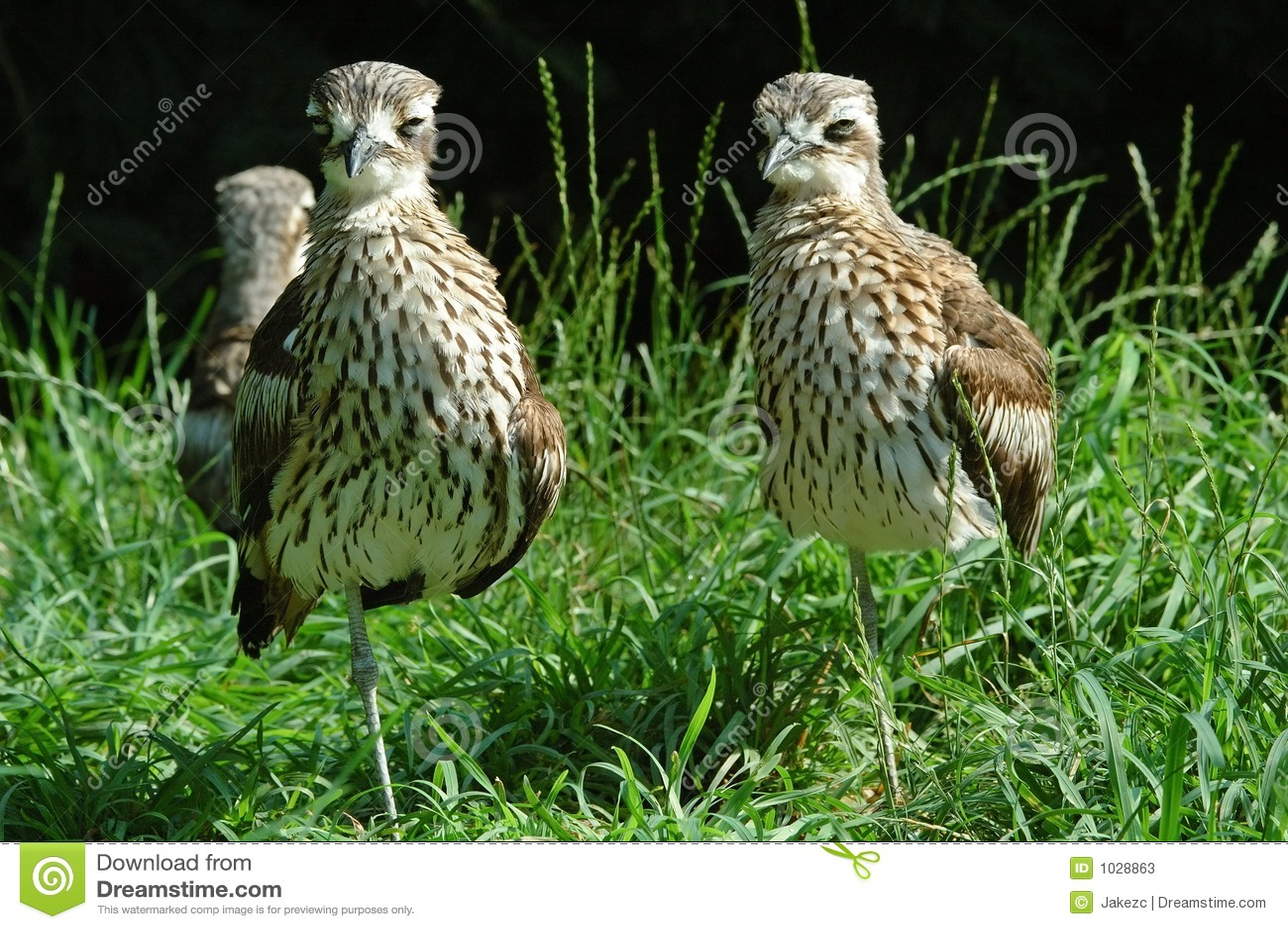 πουλιά με πόδια