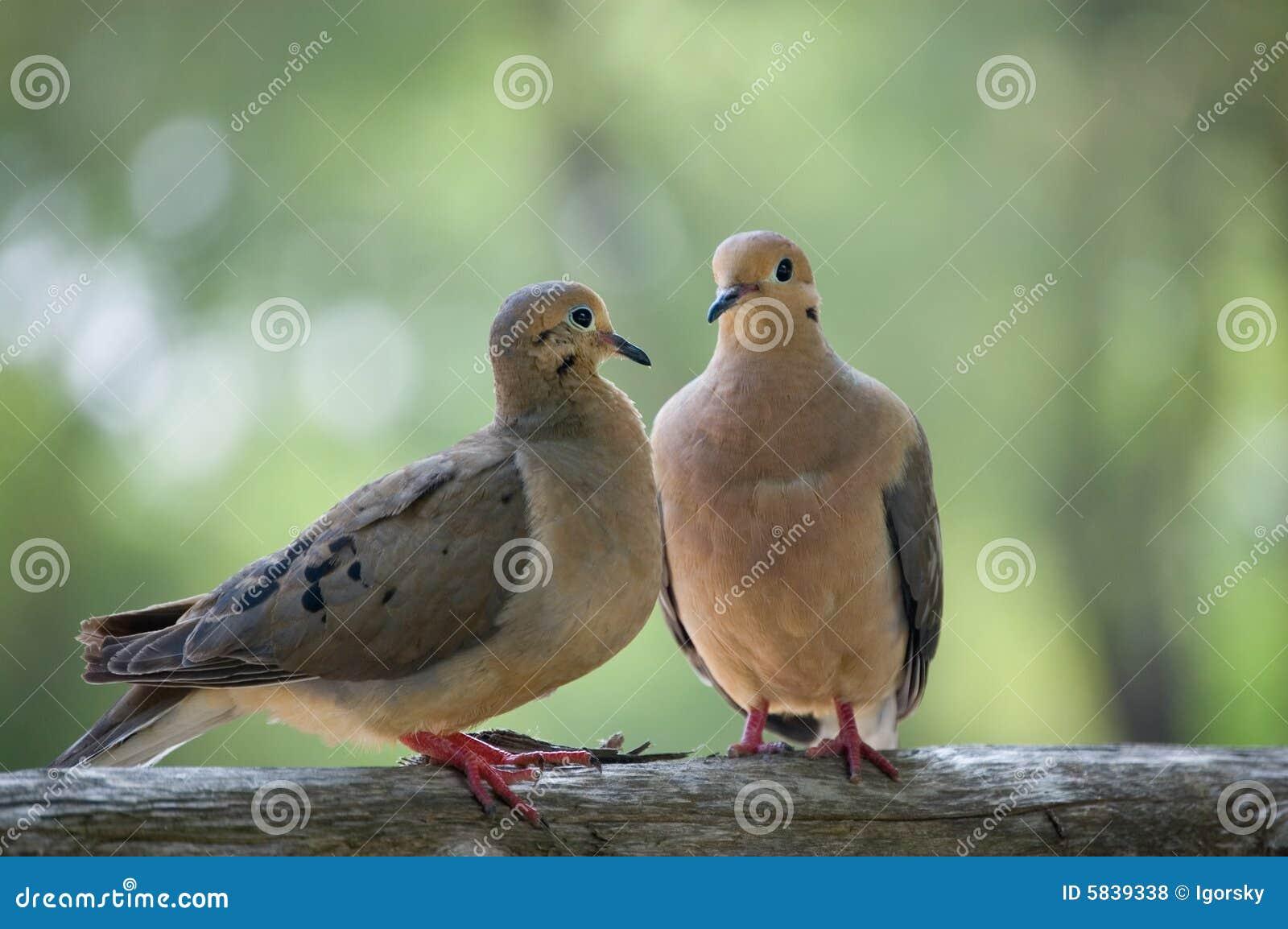 Αγαπά το πουλί