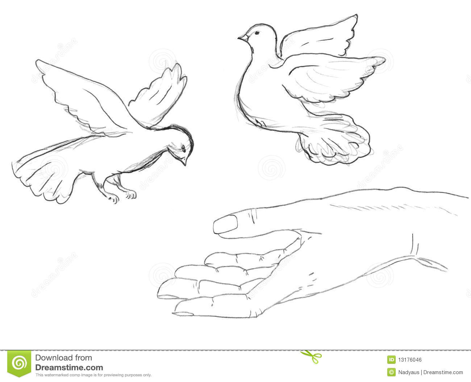 πουλιά που πετούν τον άνθρ