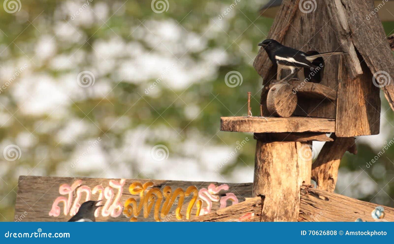 Ασιατικό κορίτσι μεγάλο μαύρο πουλί