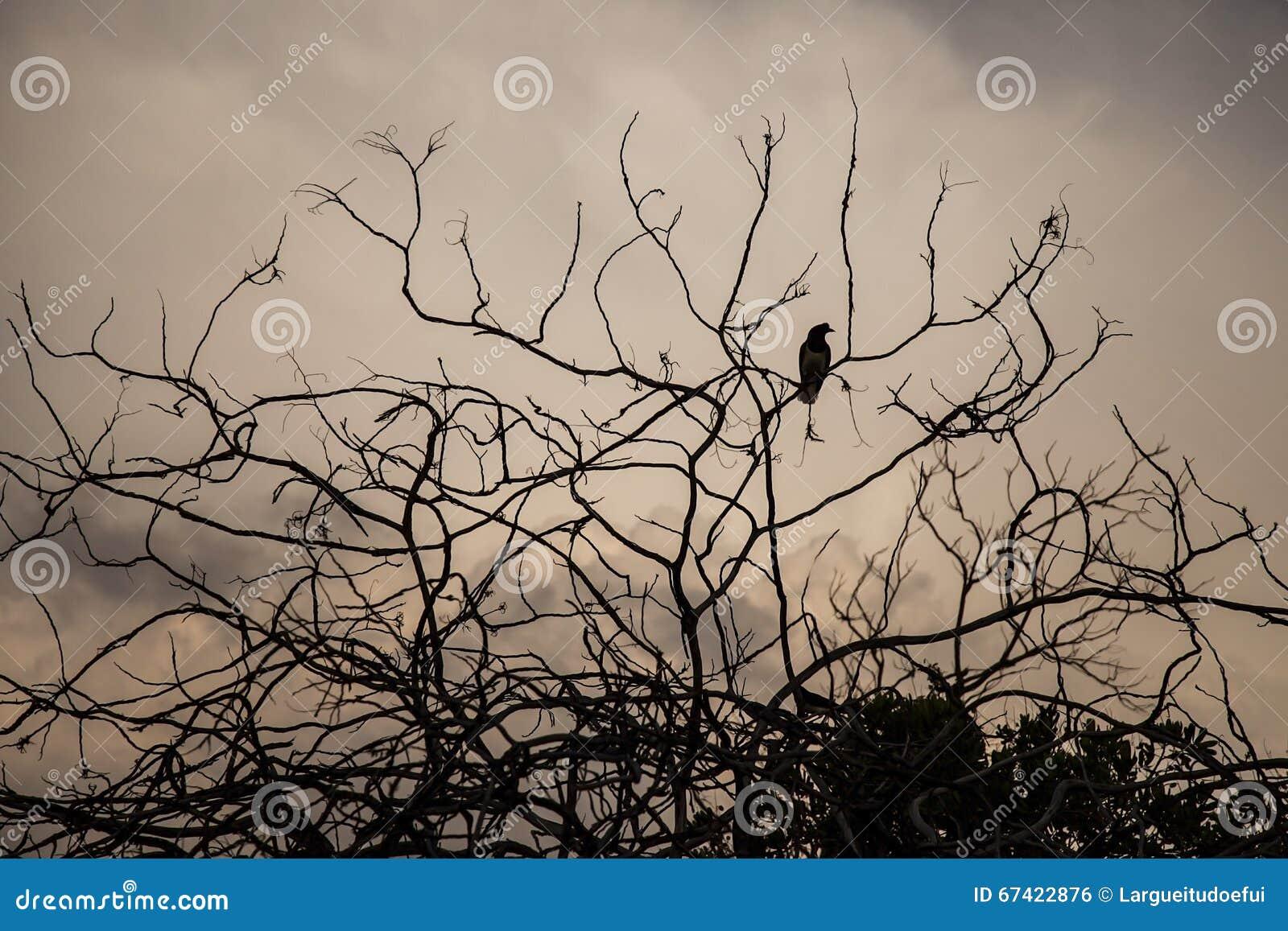 Πουλί σε ένα ξηρό δέντρο με τα σύννεφα στο υπόβαθρο