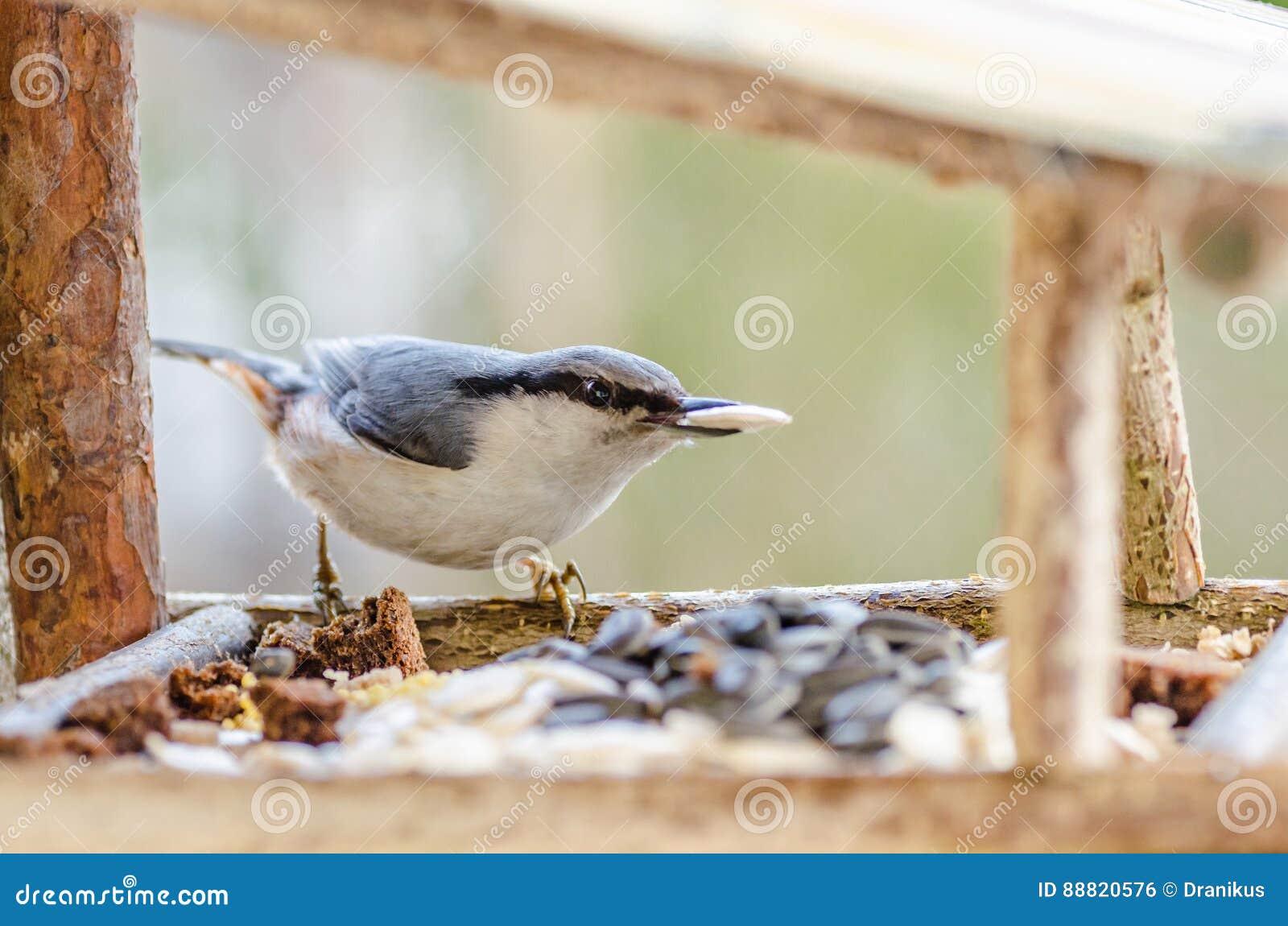 μικρό σώμα μεγάλο πουλί γυμνό μαύρο λεσβιακό μουνί