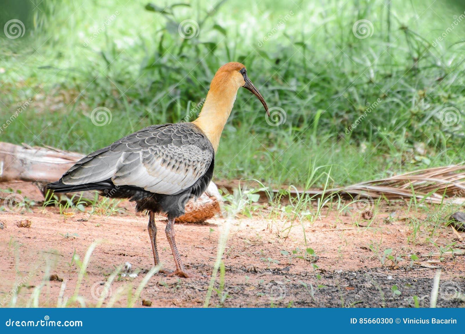 Τα αδέλφια μου μεγάλο πουλί