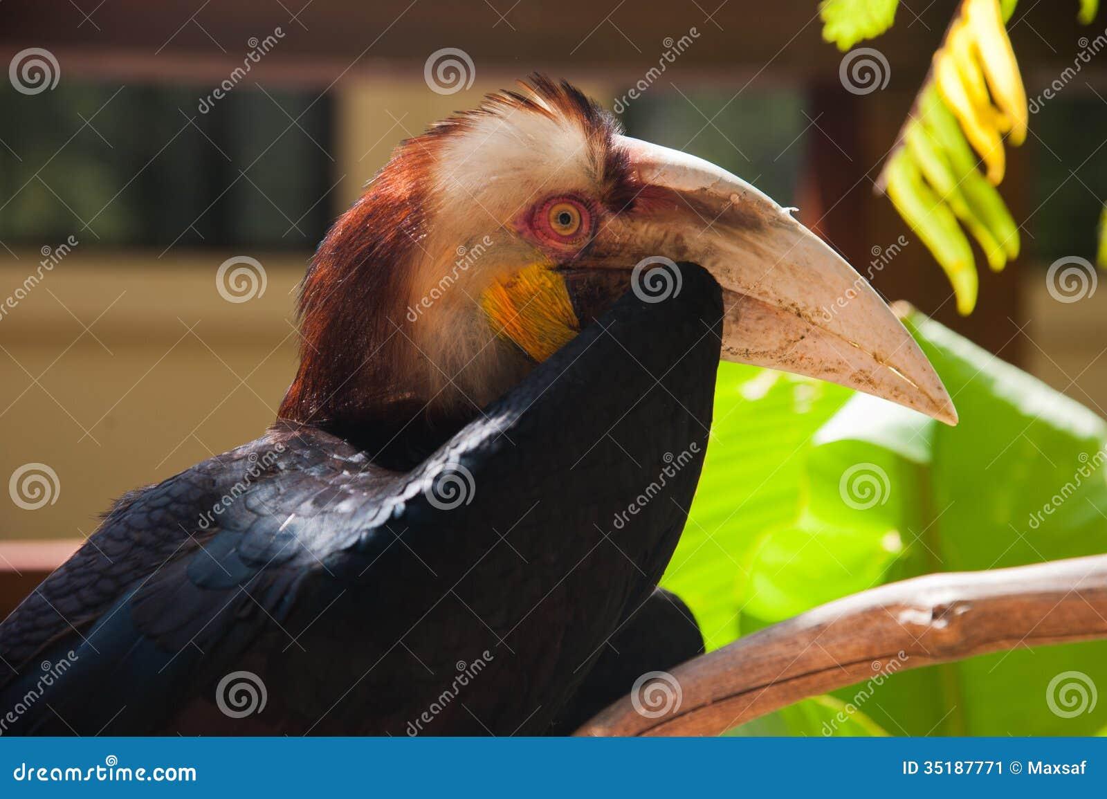 το πρώτο του μεγάλο πουλί λεπτό μαύρο τριχωτό μουνί