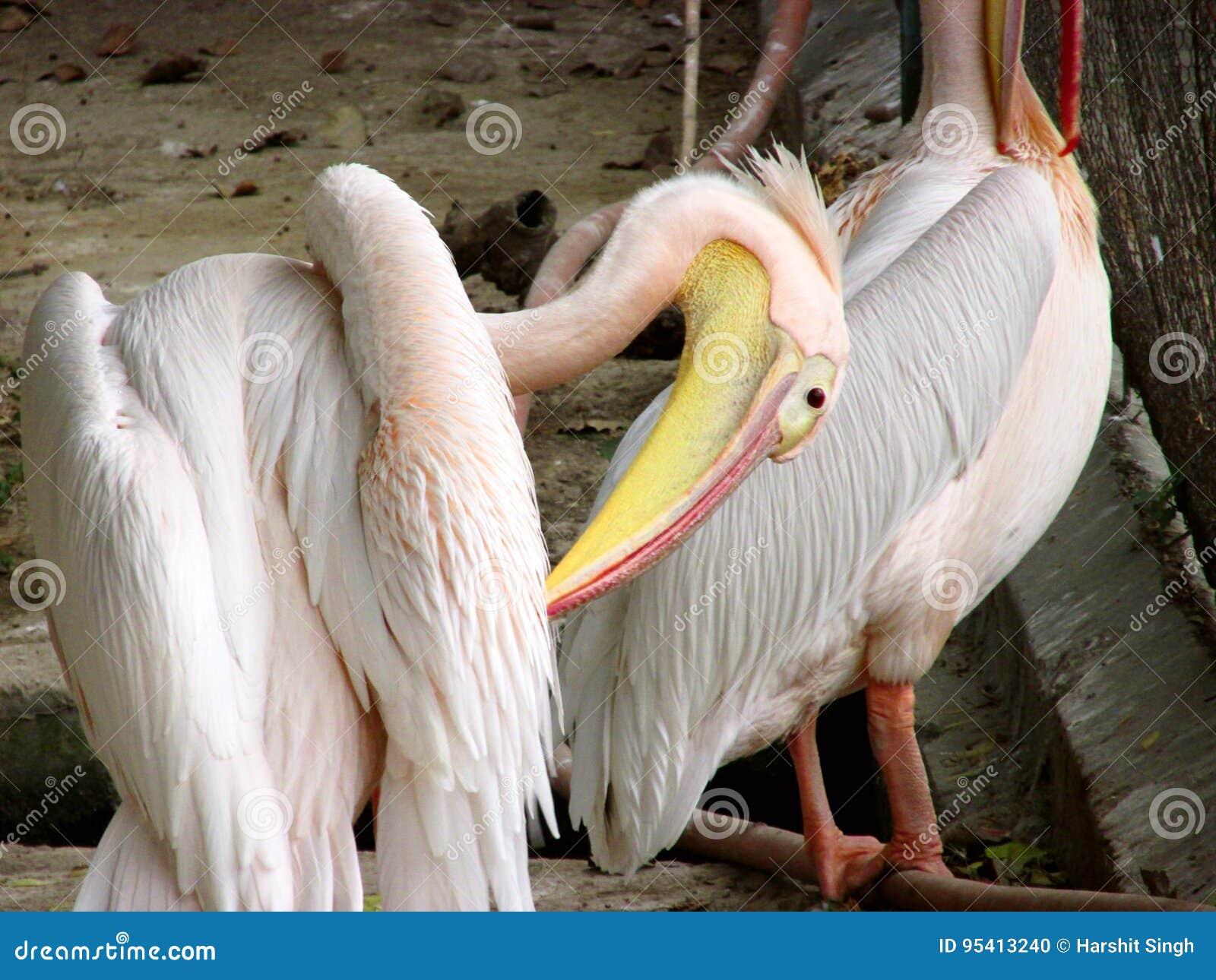 Πουλιά ή φραγμοί