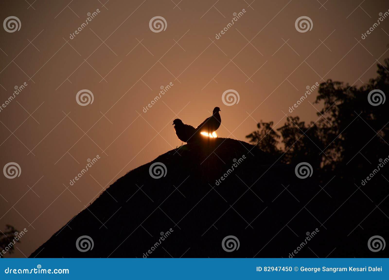 Πουλιά στη χρυσή ώρα