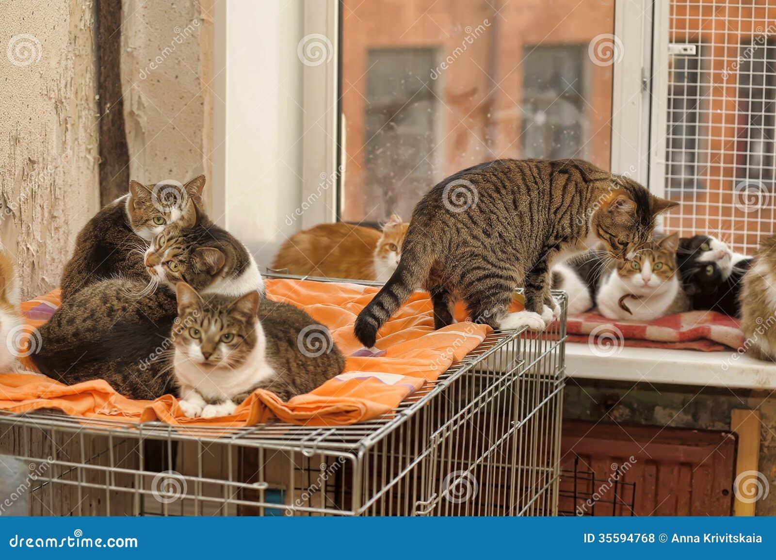 cea69ecbcd3d Πολλές γάτες από κοινού στοκ εικόνες. εικόνα από γοητεία - 35594768
