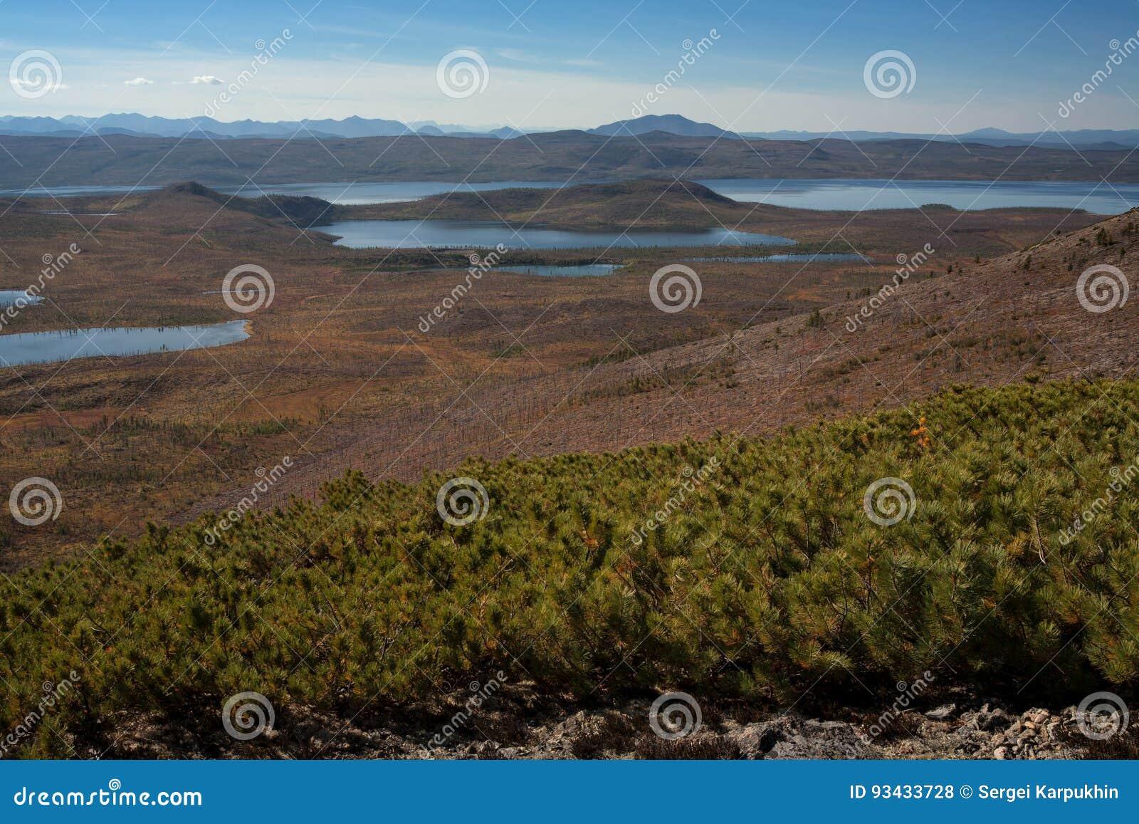 Πολλές μικρές λίμνες και taiga νεκρές
