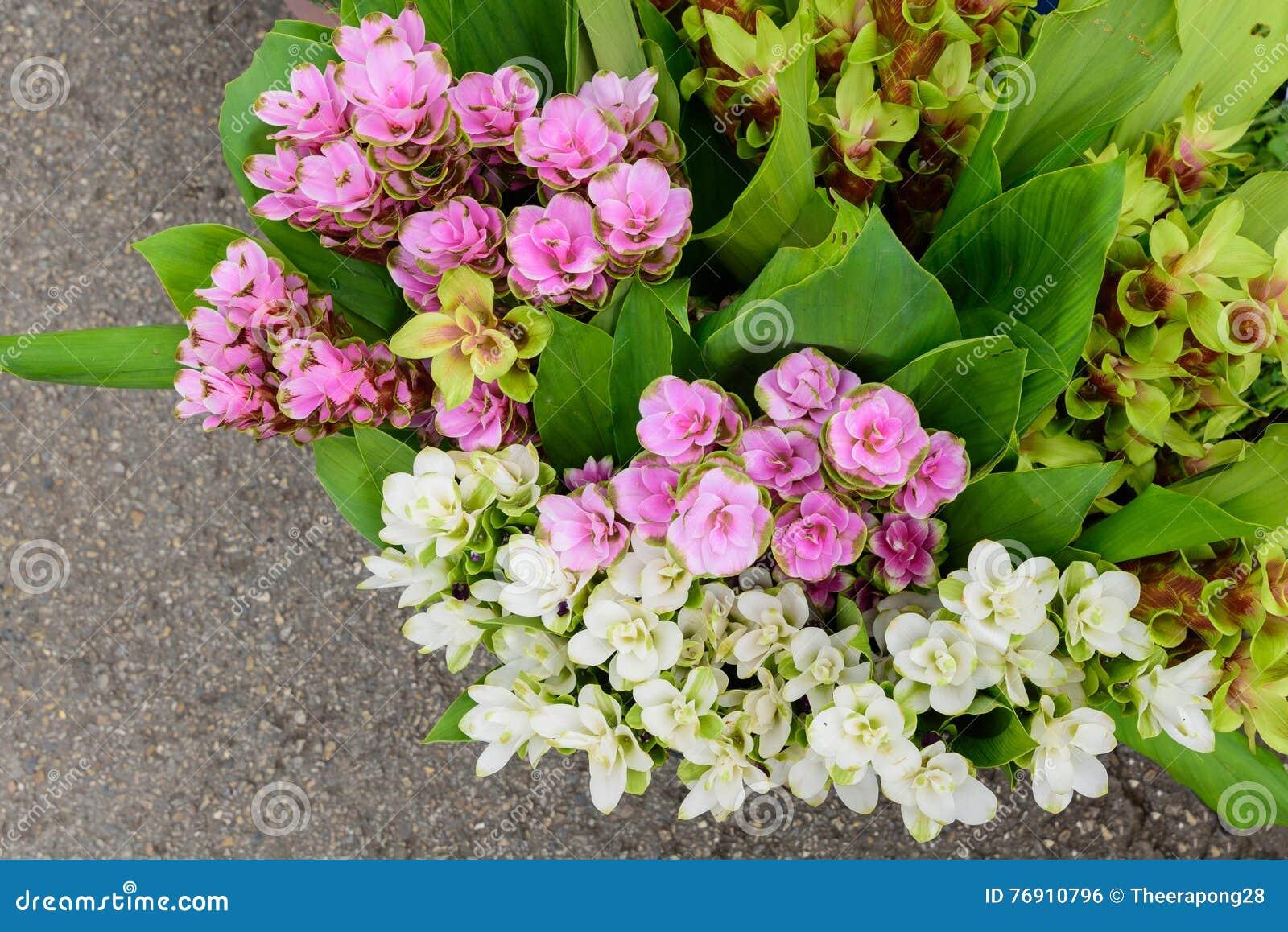 Πολλοί τύποι λουλουδιών για την πώληση κατά μήκος του τρόπου