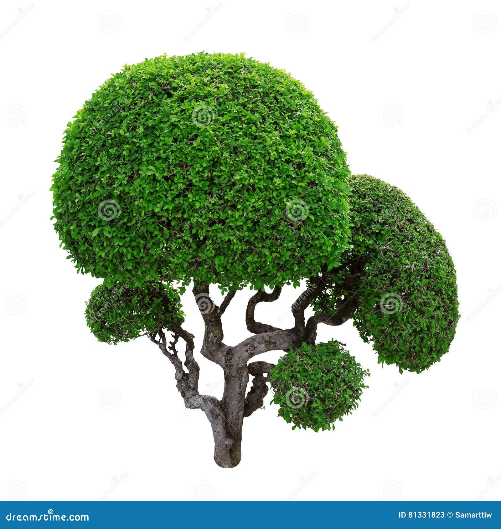 πράσινα δέντρα