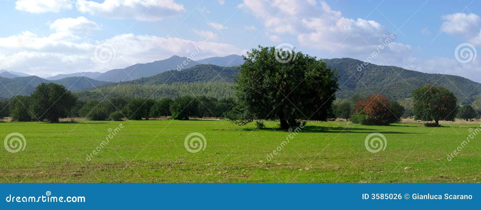 πράσινα βουνά πεδίων