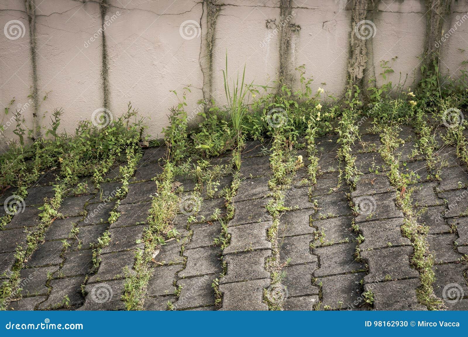 Πράσινα ζιζάνια στο πεζοδρόμιο
