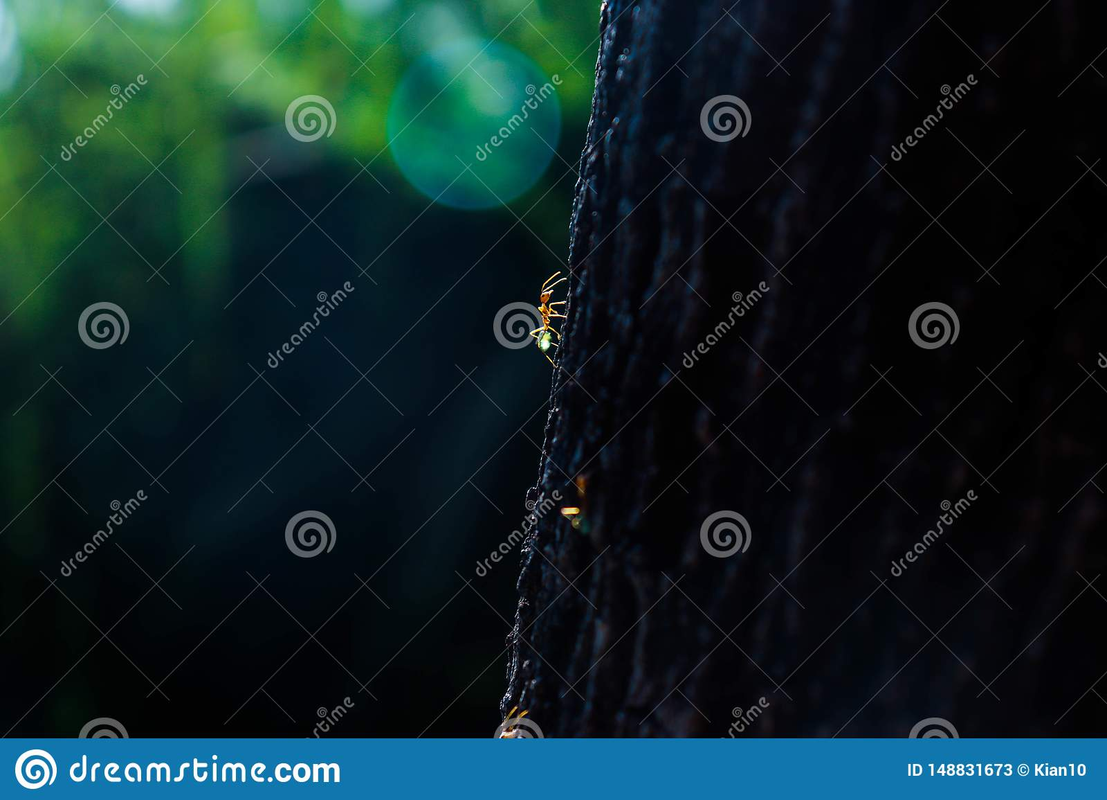 Πράσινα μυρμήγκια δέντρων σε ένα ταξίδι