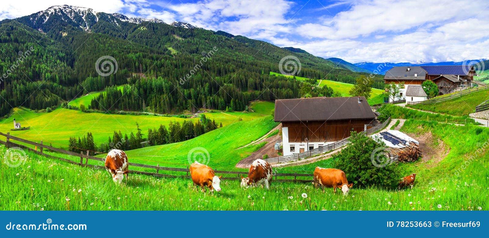 Πράσινα πολύβλαστα λιβάδια - cow& x27 λιβάδι του s, αλπικό τοπίο MO δολομιτών