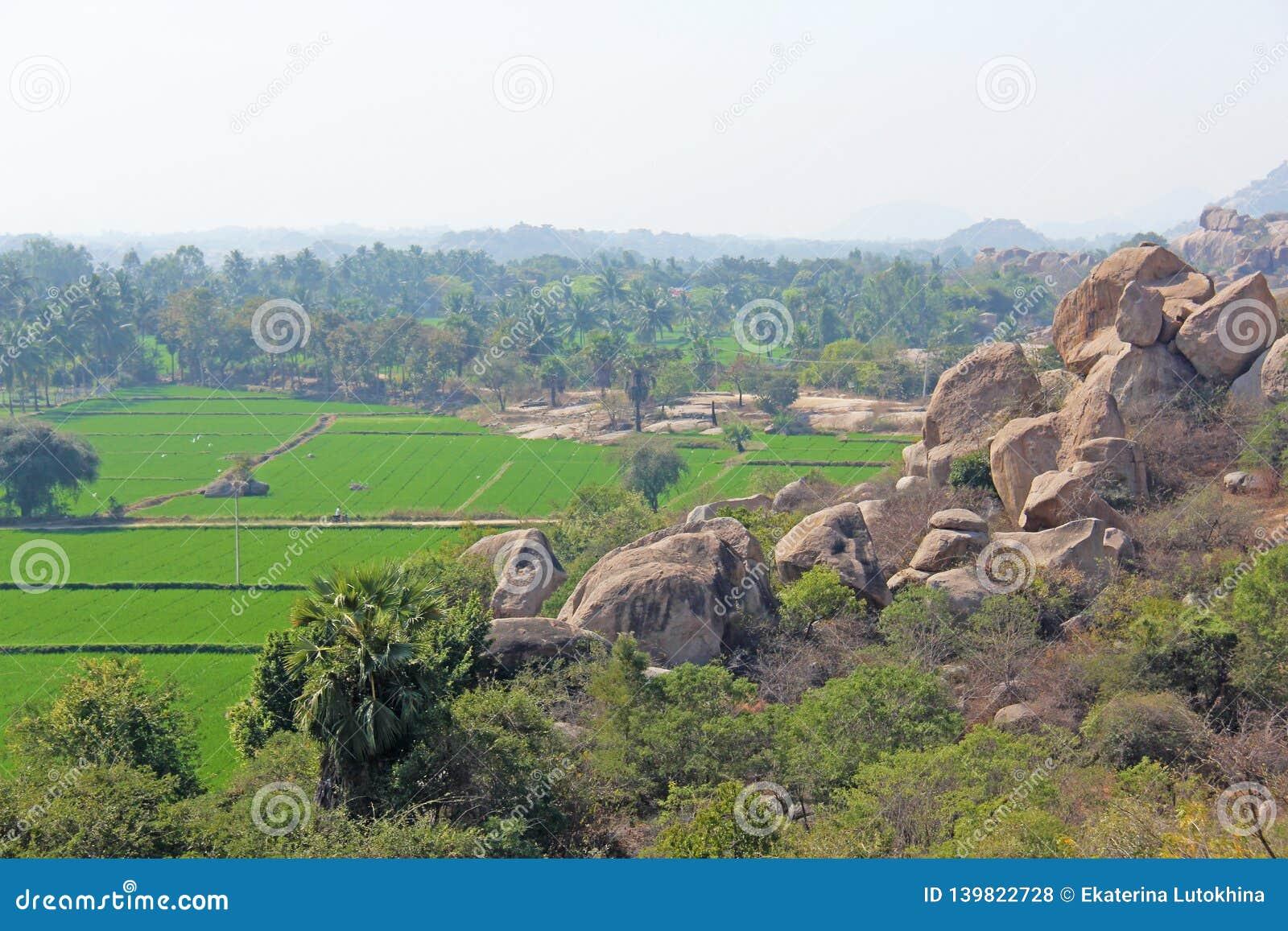 Πράσινα τομείς ή πεζούλια ρυζιού στο χωριό Hampi Φοίνικες, ήλιος, τομείς ρυζιού, μεγάλες πέτρες σε Hampi Τροπικός εξωτικός