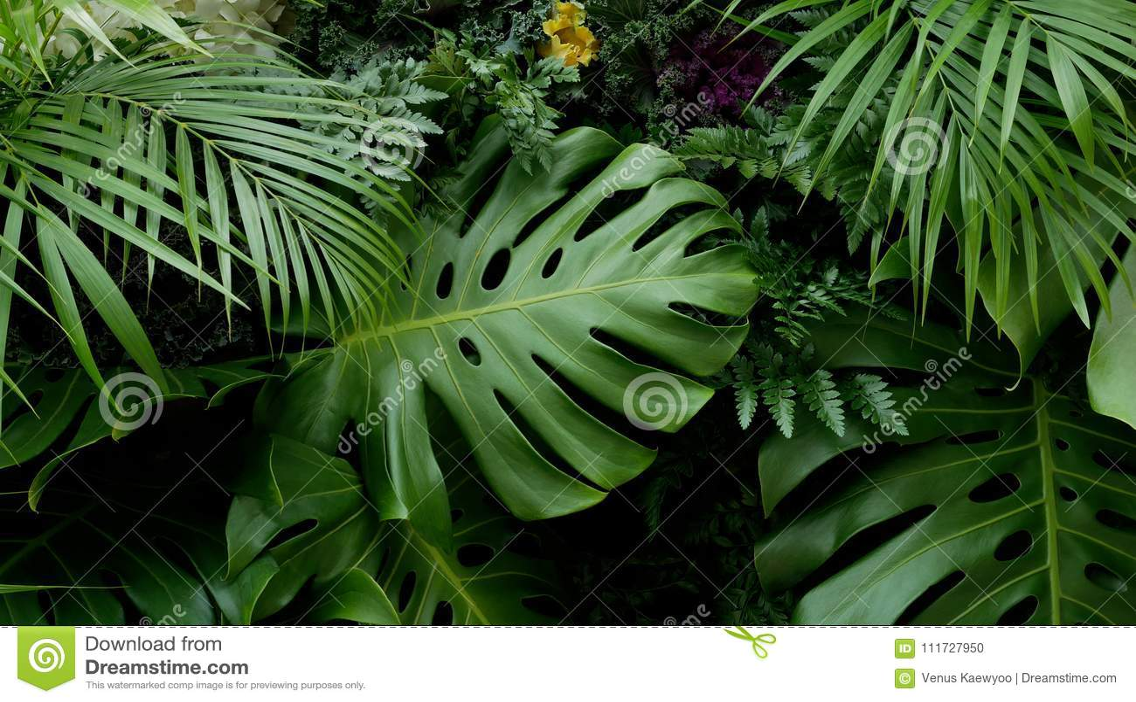 Πράσινα τροπικά φύλλα Monstera, φοίνικας, φτέρη και σκηνικό διακοσμητικών φυτών