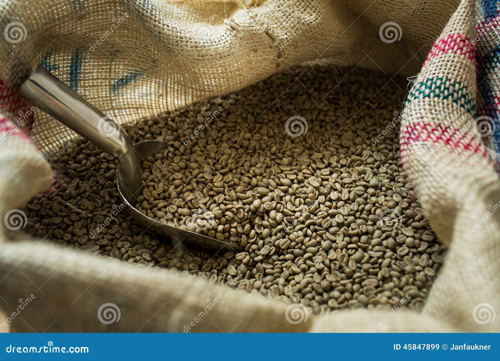 Πράσινα φασόλια καφέ