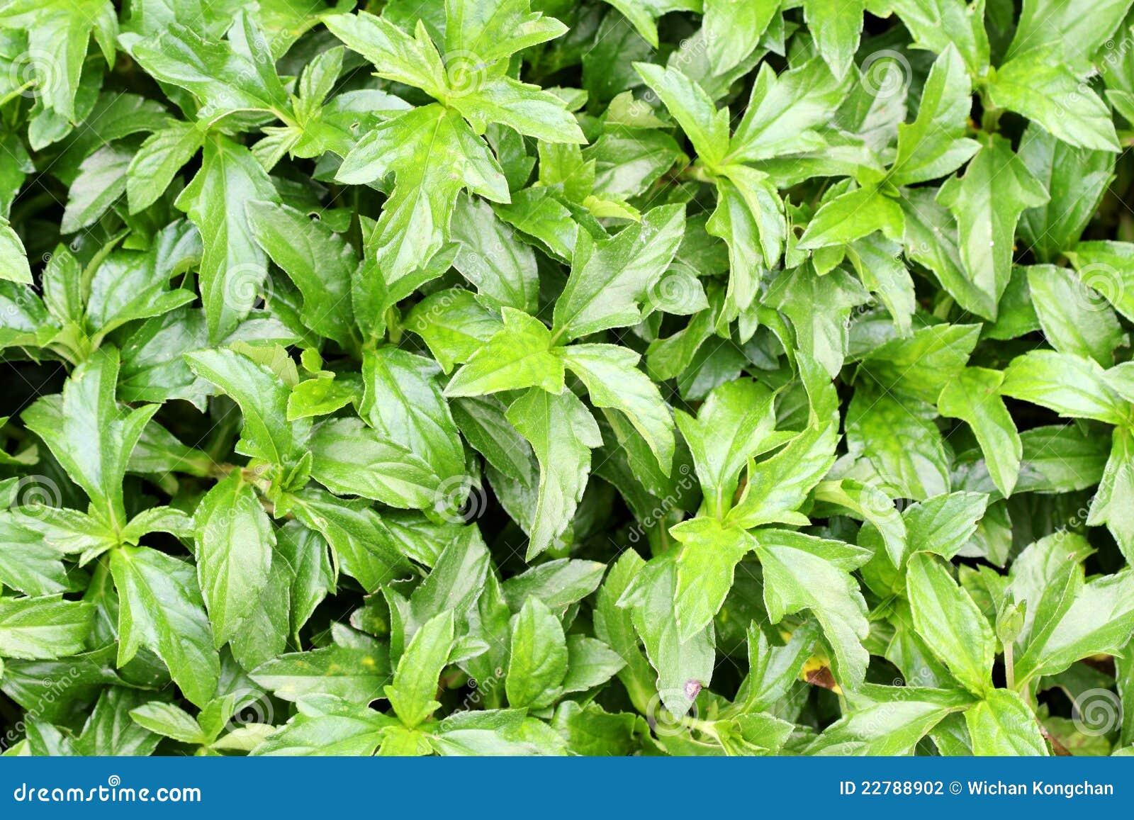πράσινα φύλλα ανασκόπησης