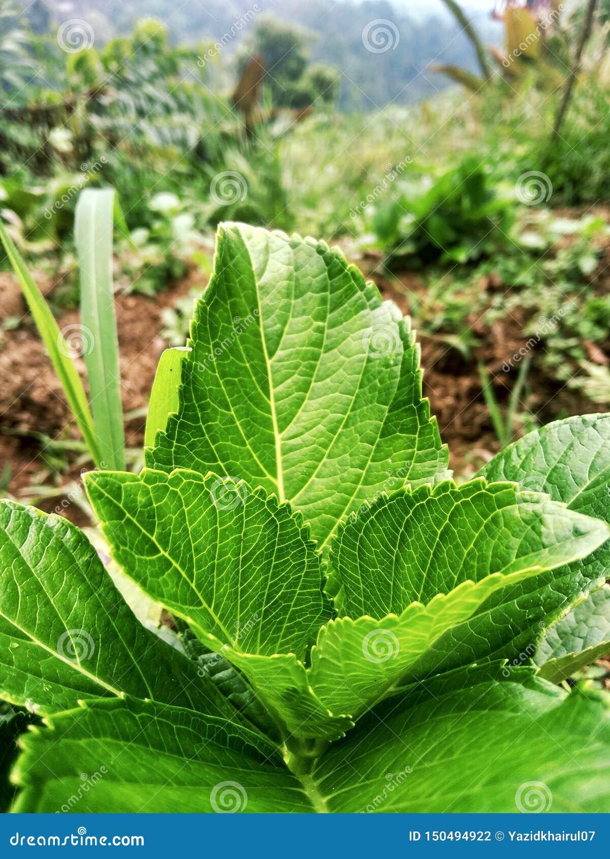 Πράσινα φύλλα σε έναν όμορφο λόφο