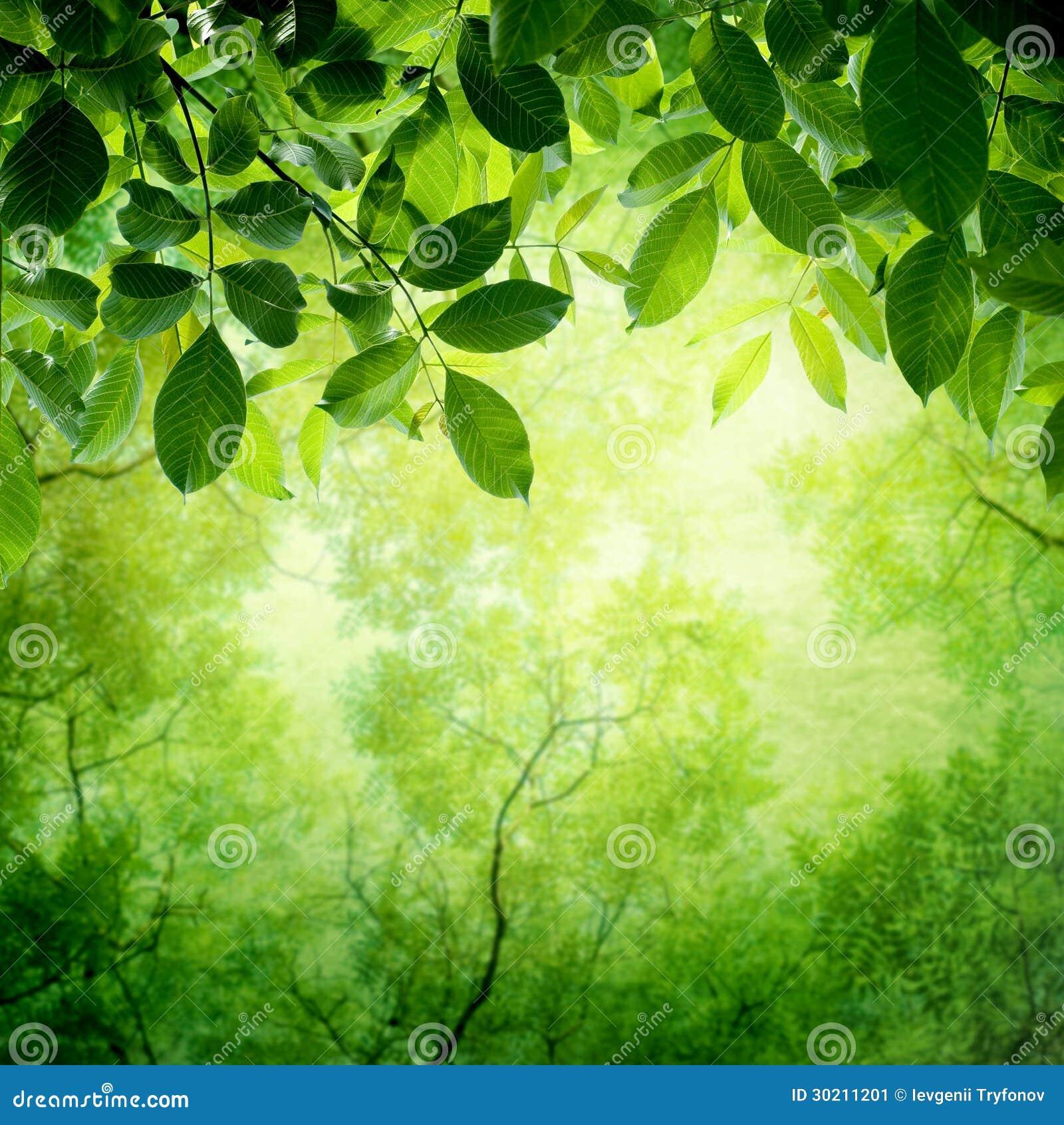 Πράσινα φύλλα με τον ήλιο