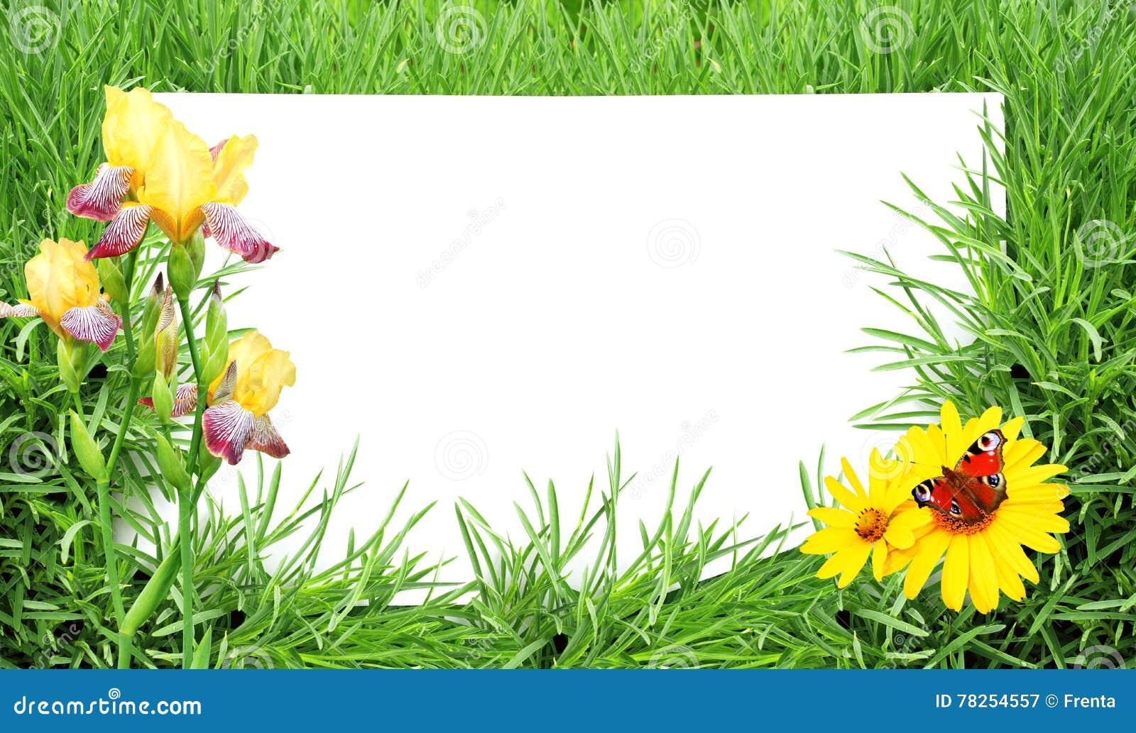 Πράσινα χλόη, λουλούδι, πεταλούδα και φύλλο της Λευκής Βίβλου