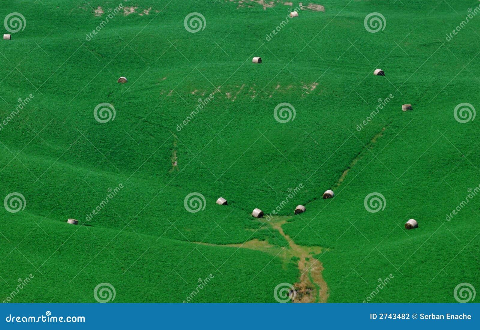 πράσινες κλίσεις
