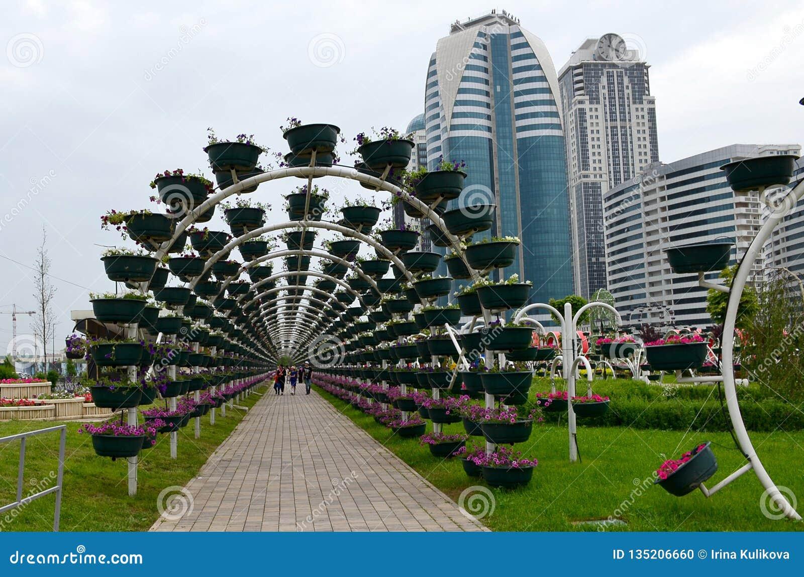 Πράσινη αψίδα στο πάρκο λουλουδιών της πόλης του Γκρόζνυ, Τσετσενία, Ρωσία Οικοδόμηση της σύνθετης πόλης του Γκρόζνυ στο υπόβαθρο