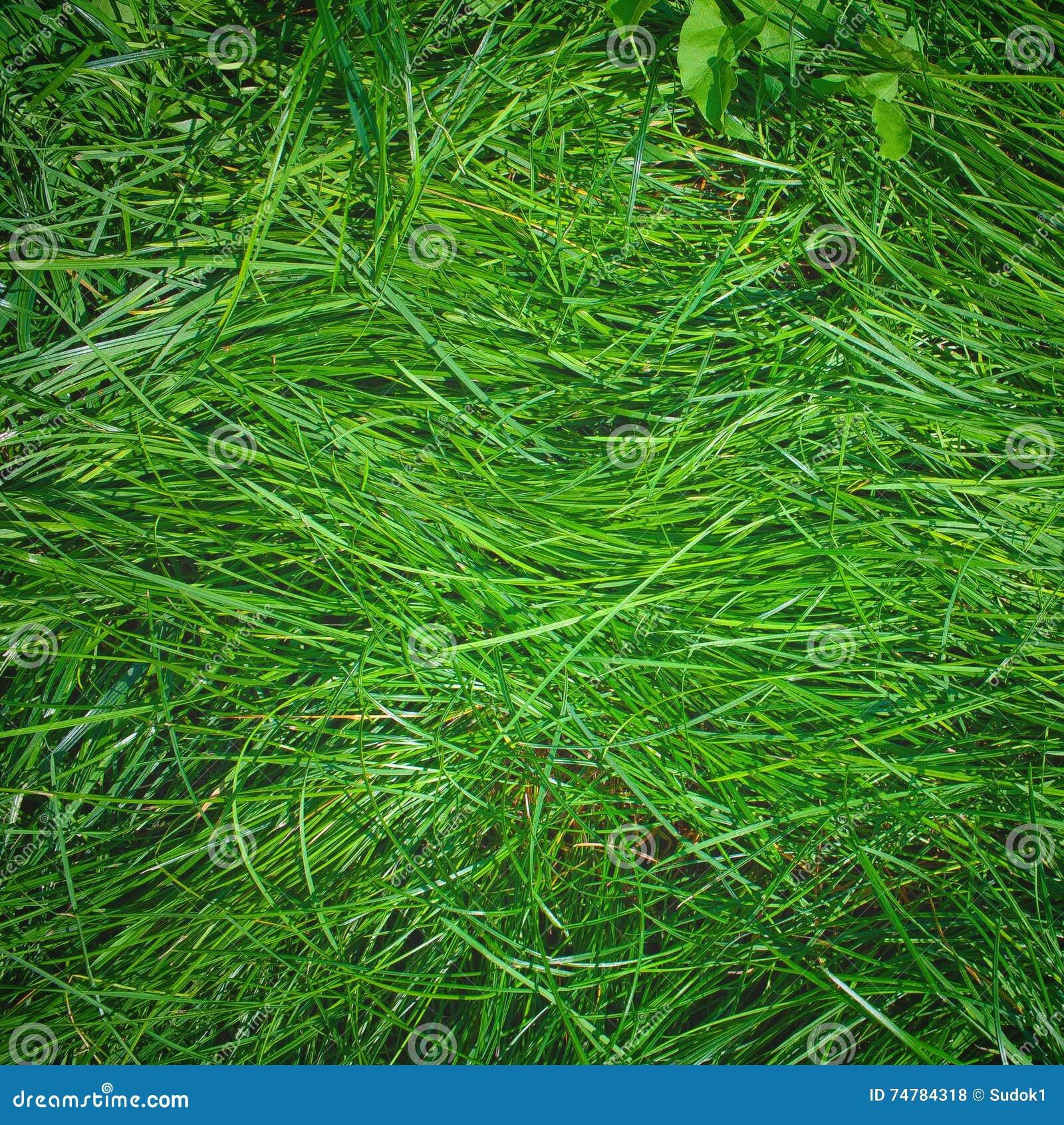 Πράσινη μακριά πλούσια χλόη χορτοταπήτων