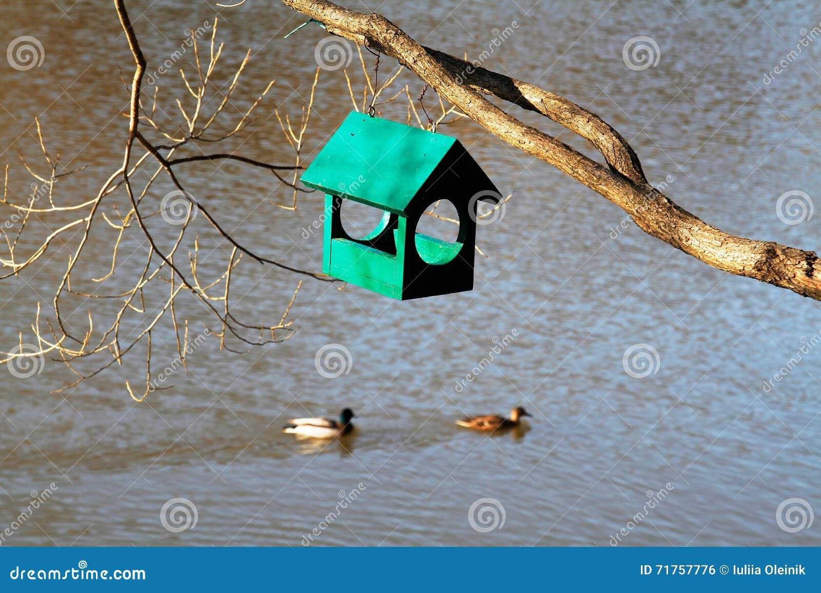Πράσινη ξύλινη ένωση birdhouse στον κλάδο δέντρων με τις πάπιες