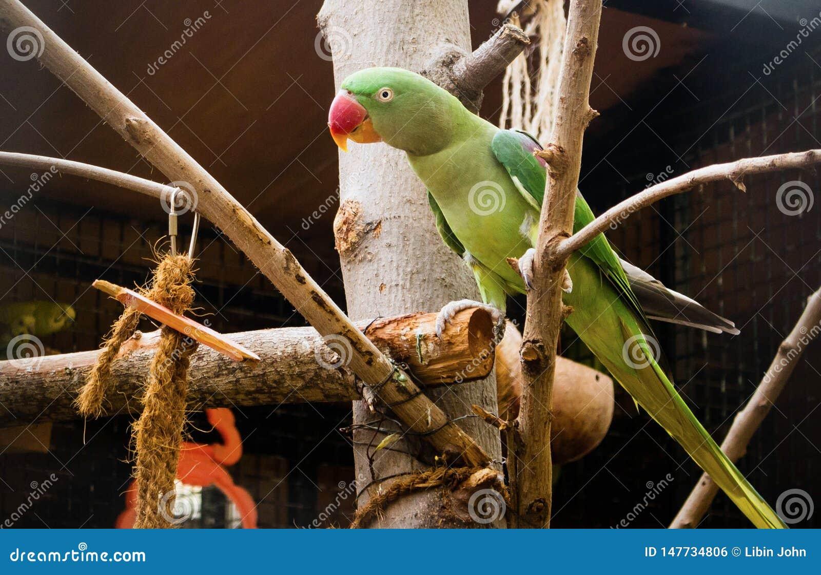 Πράσινη συνεδρίαση παπαγάλων στο δέντρο