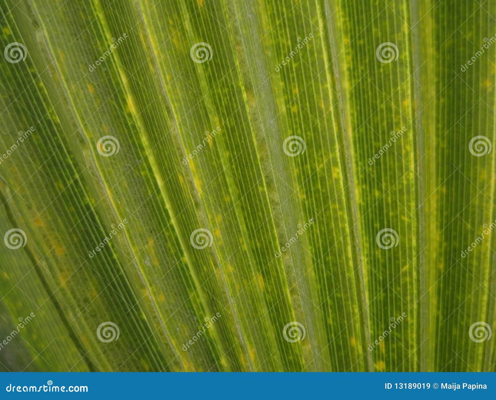 πράσινη σύσταση φοινικών άδ&epsil