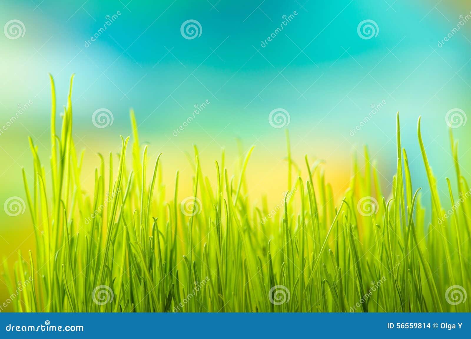 Download Πράσινη χλόη πεδίο βάθους ρηχό Στοκ Εικόνες - εικόνα από πράσινος, έξυπνο: 56559814