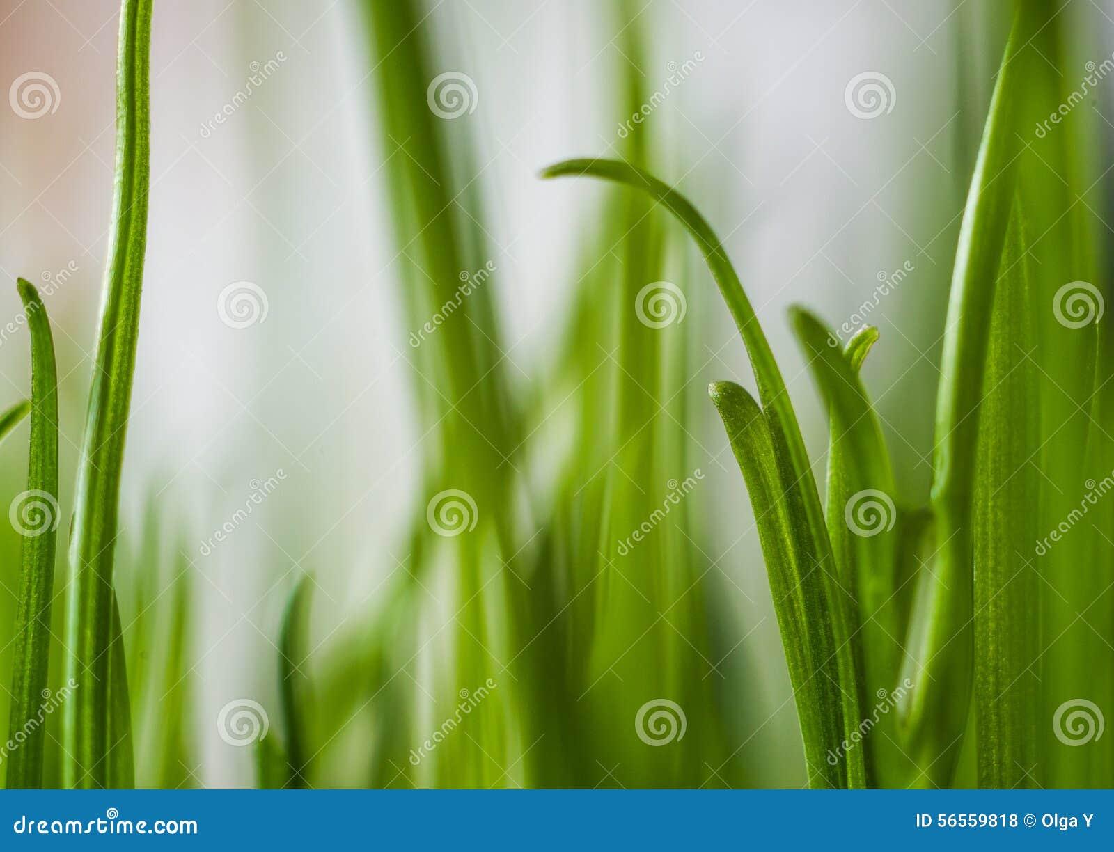 Download Πράσινη χλόη πεδίο βάθους ρηχό Στοκ Εικόνες - εικόνα από μεθύστακας, φρεσκάδα: 56559818