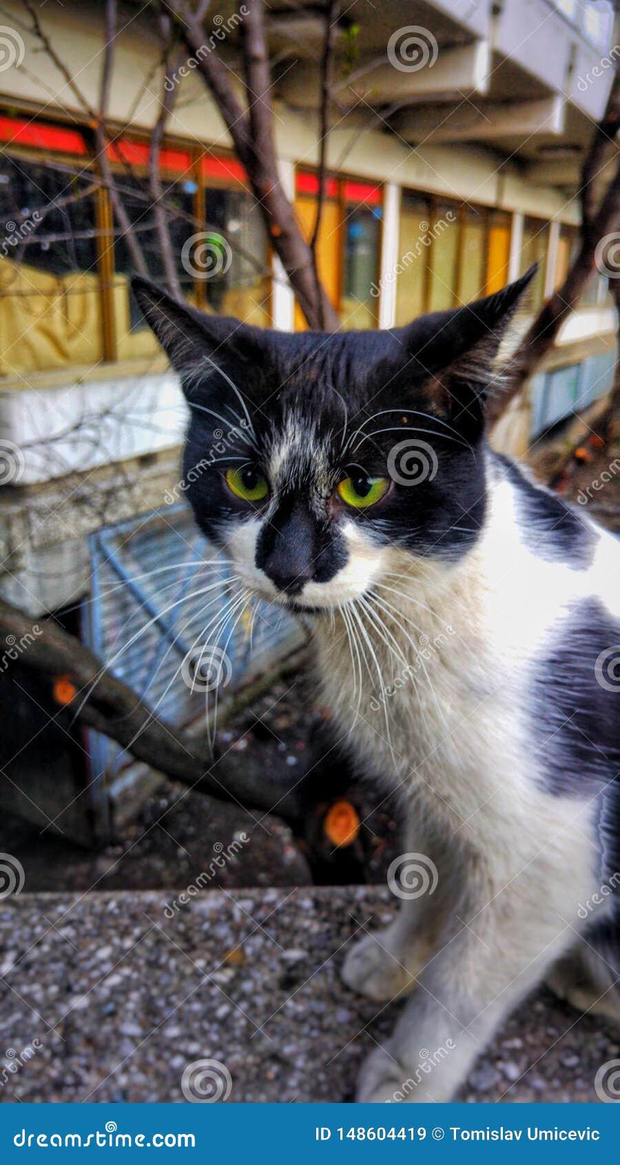 Πράσινη eyed γάτα που παρατηρεί καθμένος κοντά στο δρόμο