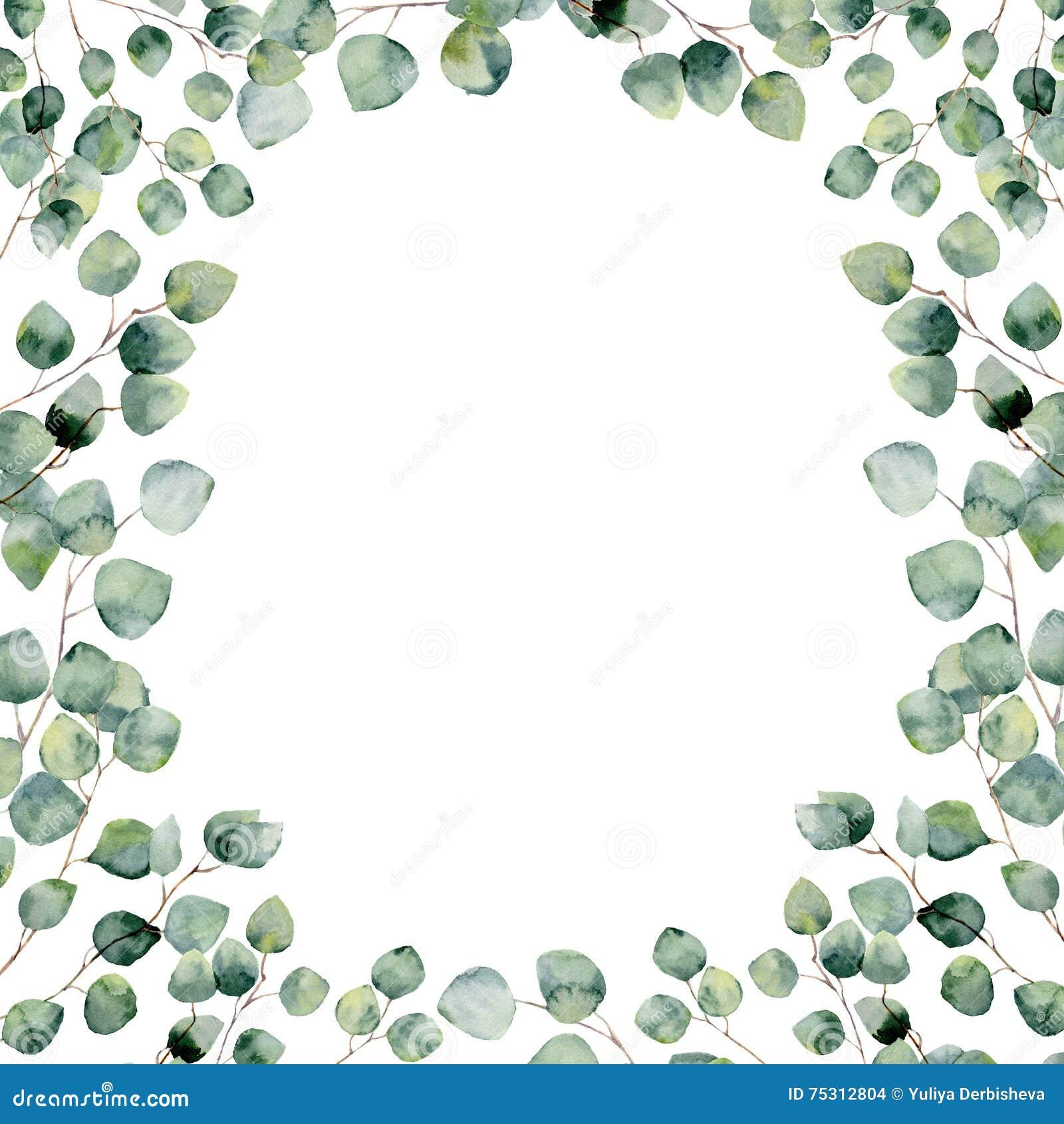 Πράσινη floral κάρτα πλαισίων Watercolor με τα στρογγυλά φύλλα ευκαλύπτων