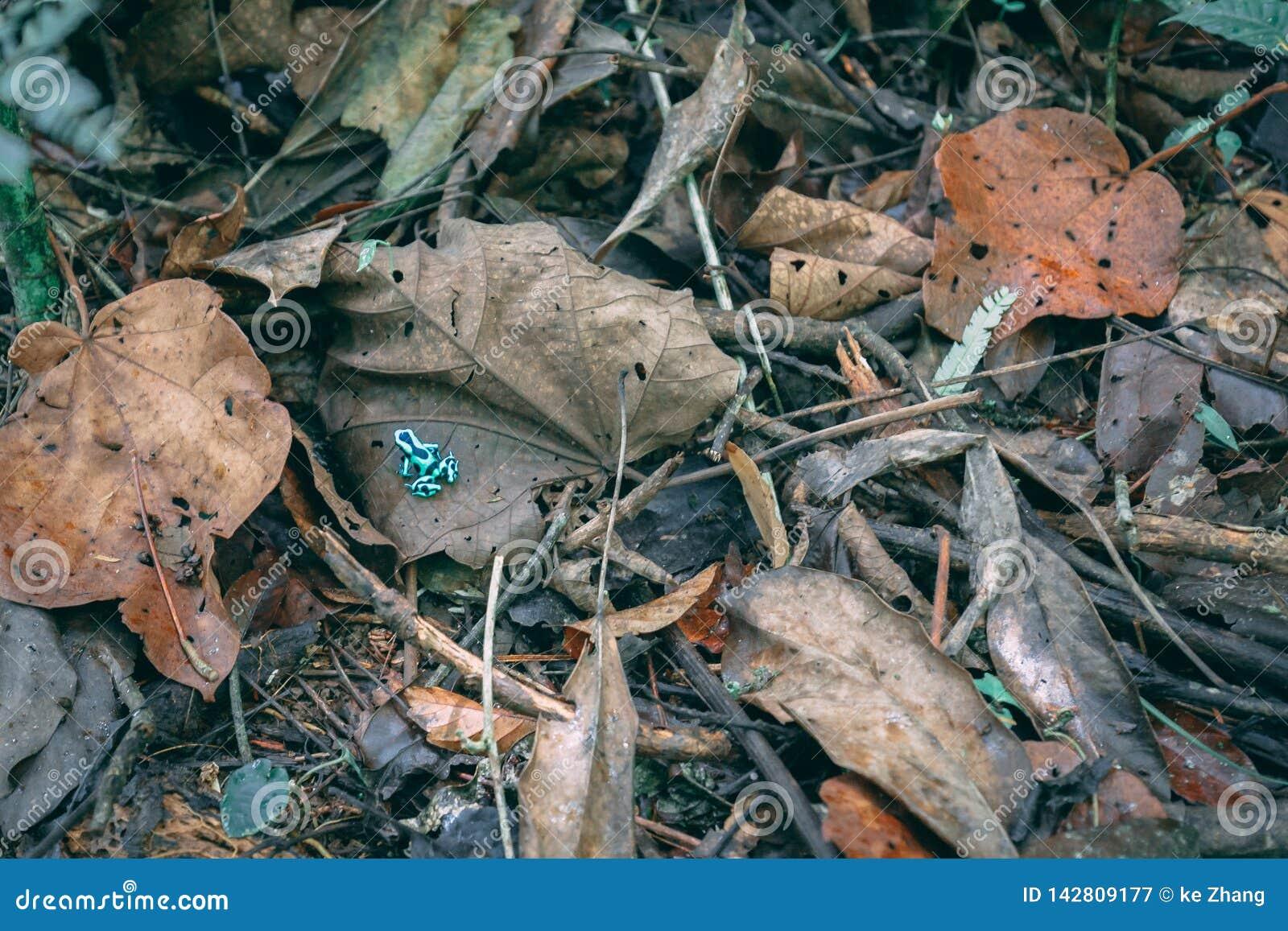 Πράσινος βάτραχος στα φύλλα πτώσης