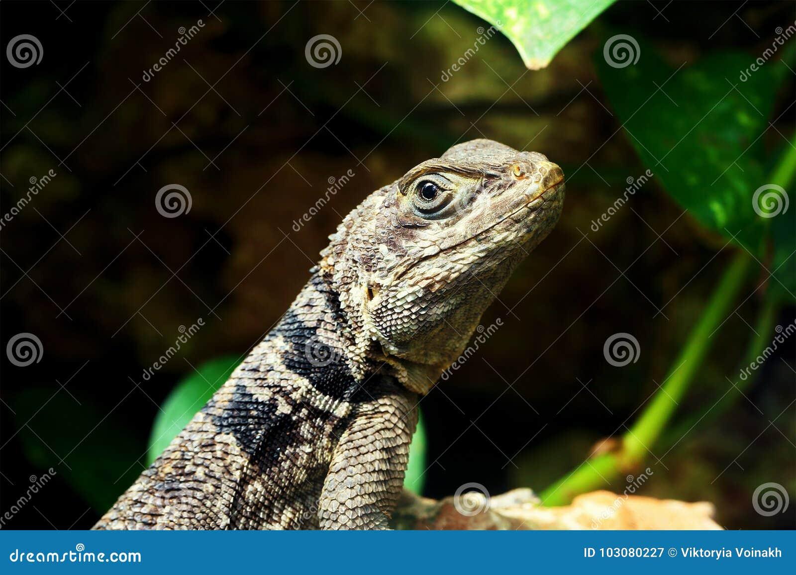 Πράσινος μικρός στενός επάνω gecko σαυρών