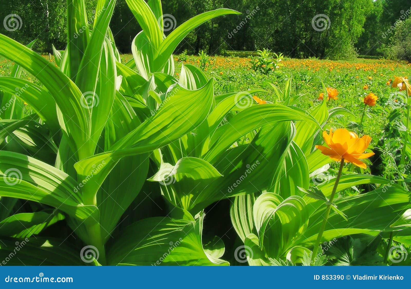 πράσινος παράδεισος