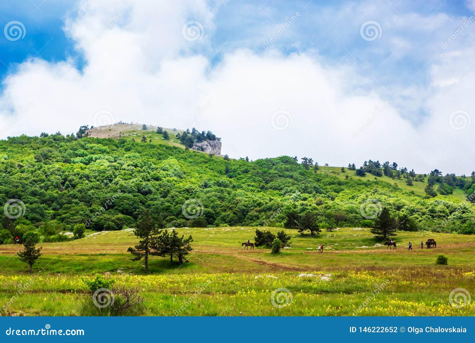Πράσινος τομέας χλόης στα βουνά και μπλε ουρανός με τα σύννεφα