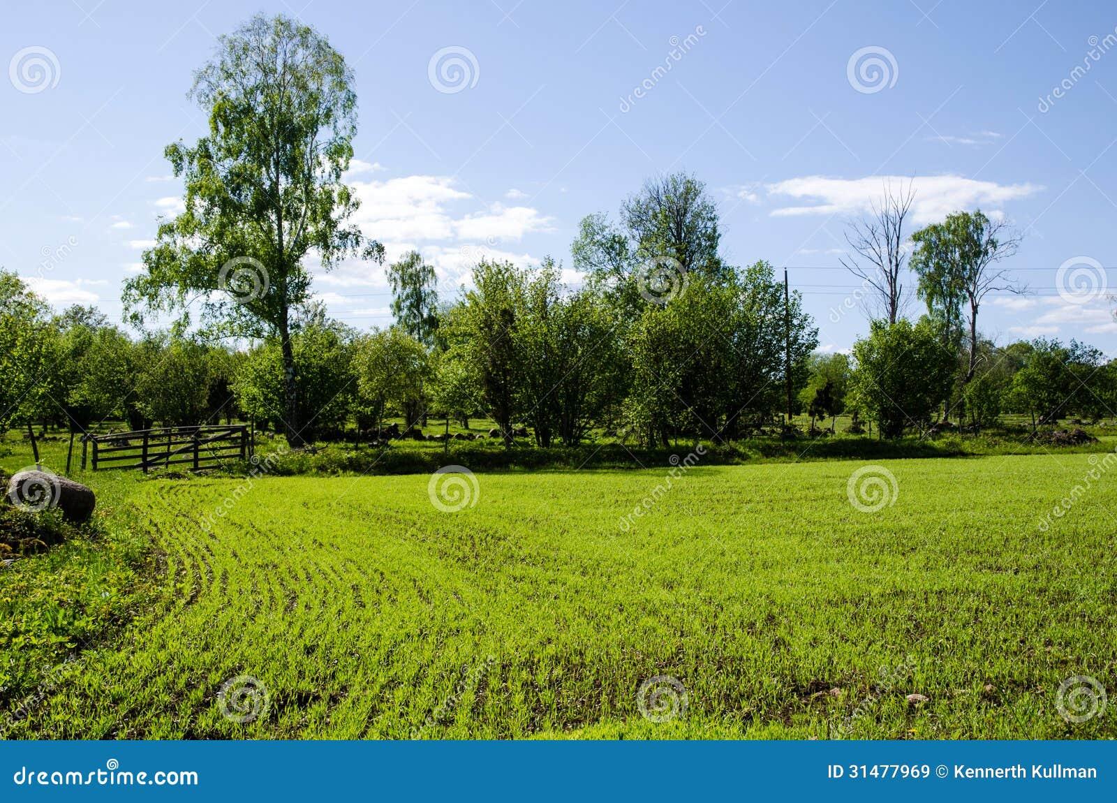 Πράσινος τομέας