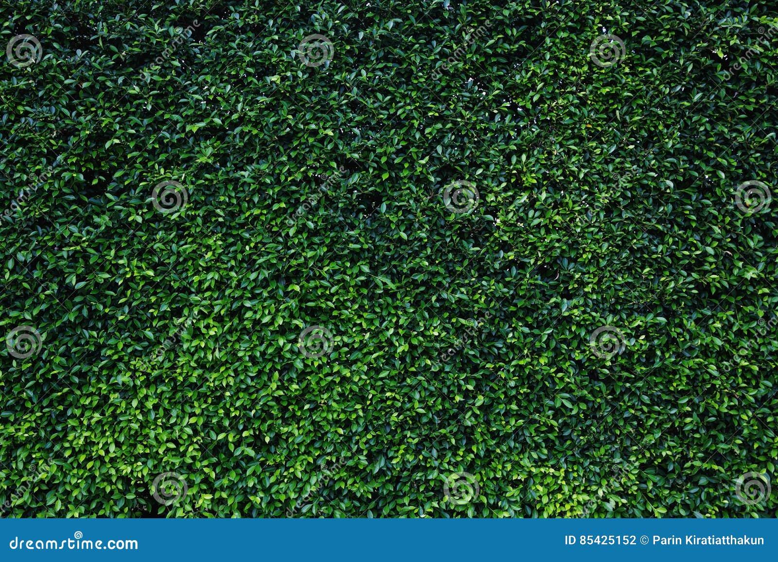 Πράσινος φυσικός τοίχος φύλλων