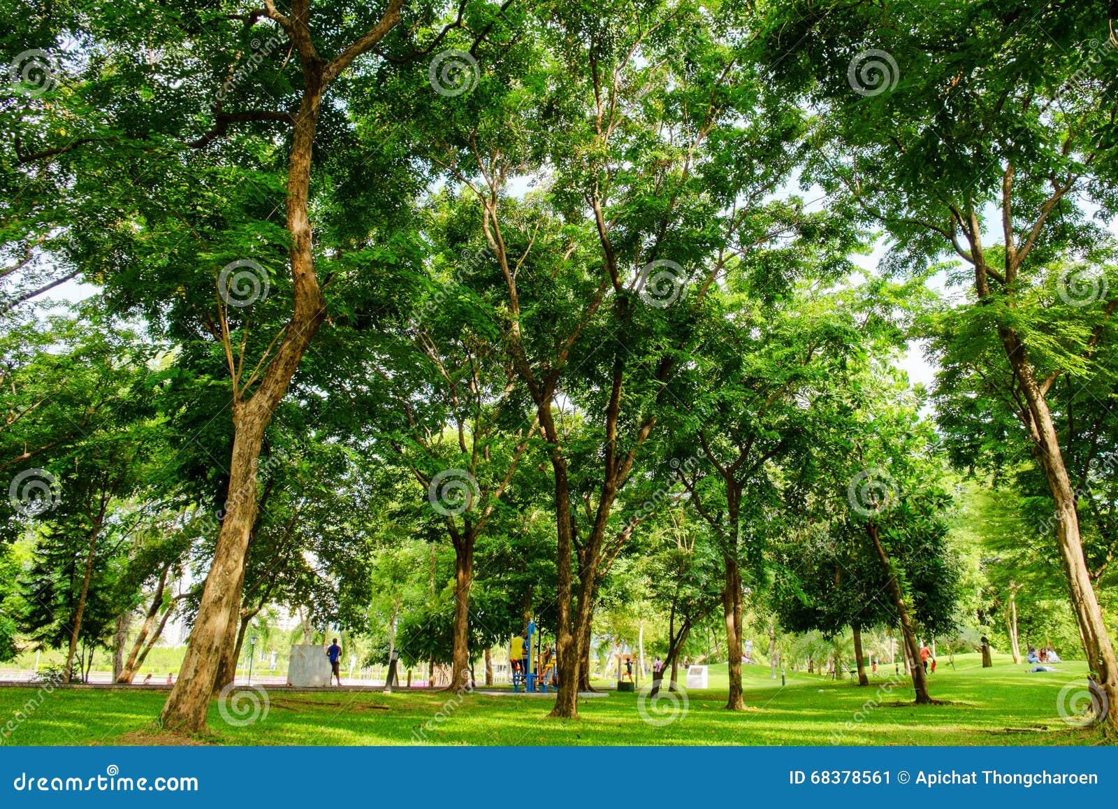 Πράσινος χορτοτάπητας στο πάρκο πόλεων