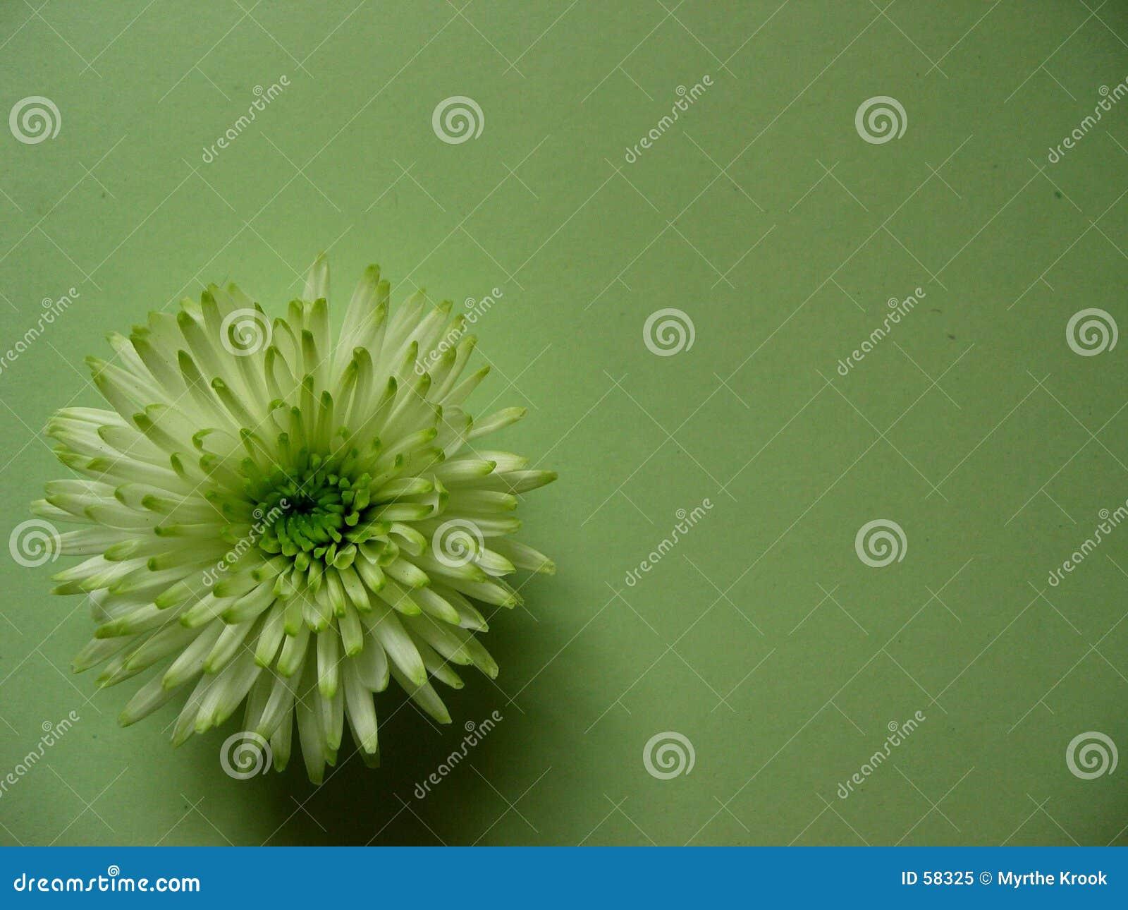 πράσινος