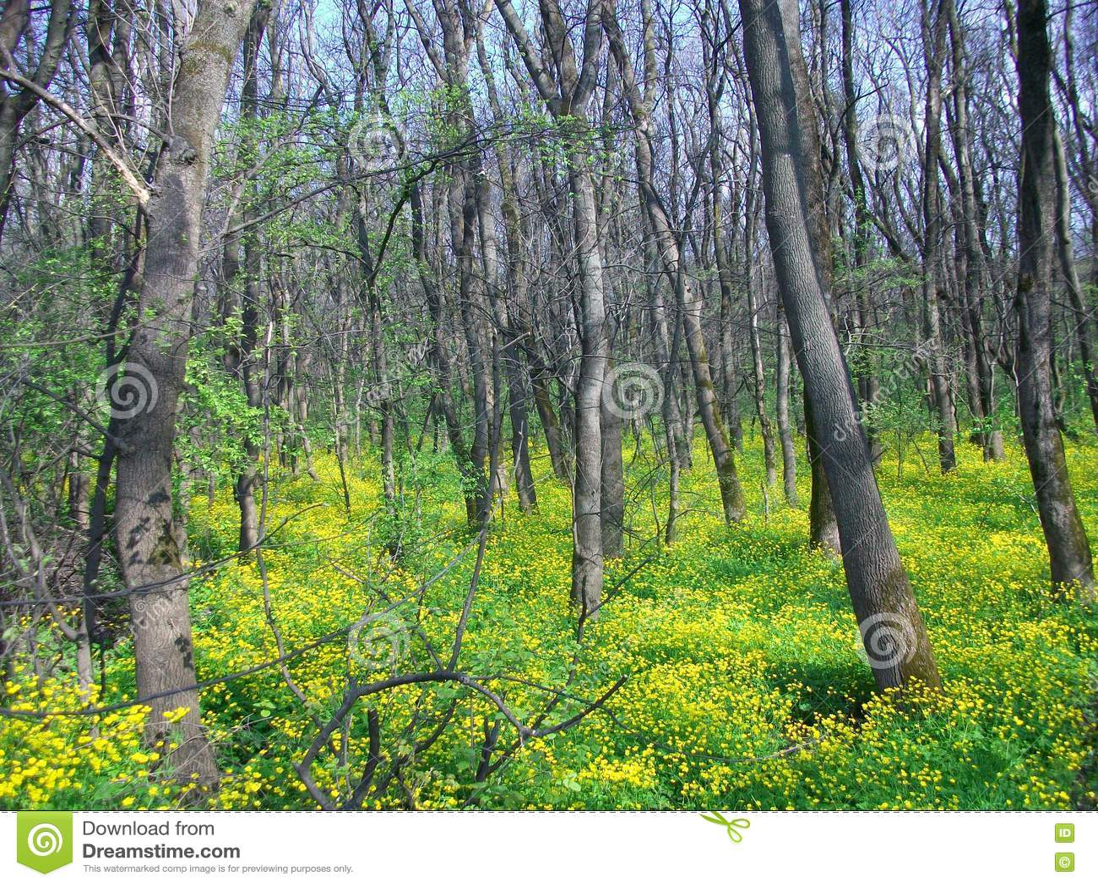 Πράσινο δάσος άνοιξη στις ακτίνες ήλιων