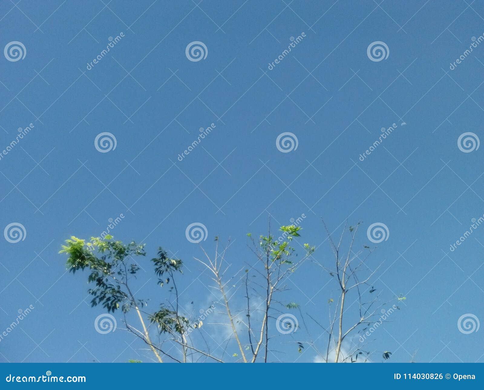 Πράσινο άσπρο σύννεφο φύλλων δέντρων