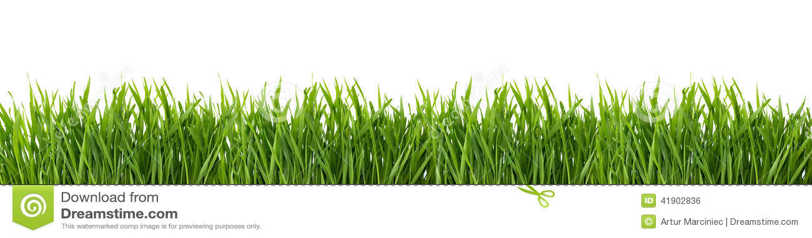 πράσινο απομονωμένο λευκό χλόης ανασκόπησης