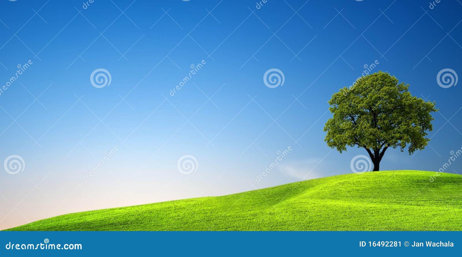 πράσινο δέντρο ηλιοβασι&lambda